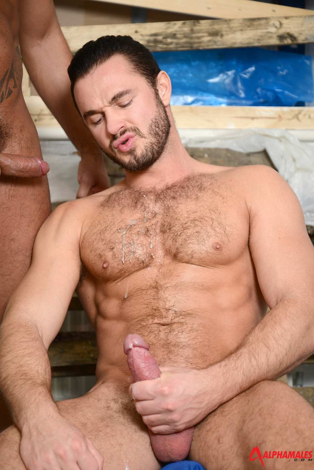 Hairy Gay Video Tumblr